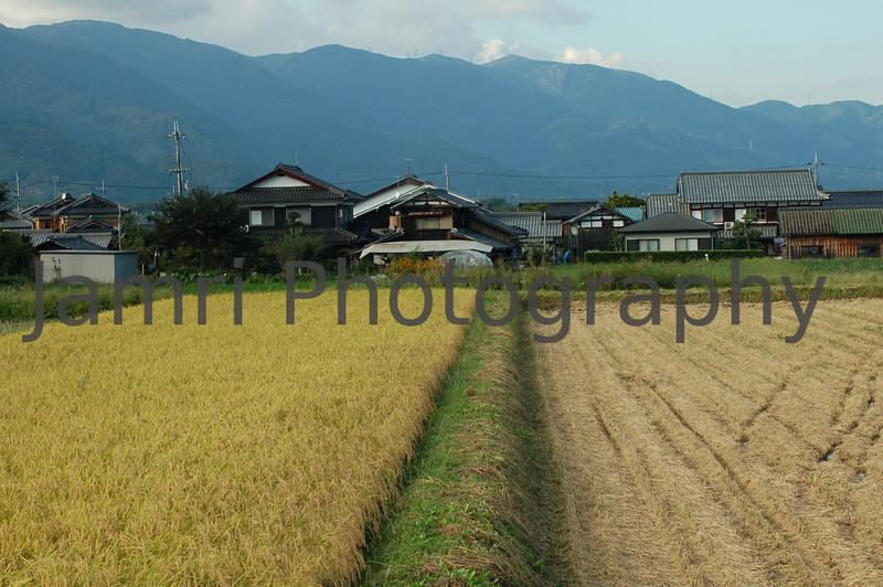 One more field to go, Omi-Imazu, Shiga-ken, Japan