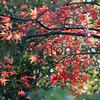 Red on Green, Arashiyama, Kyoto, Japan