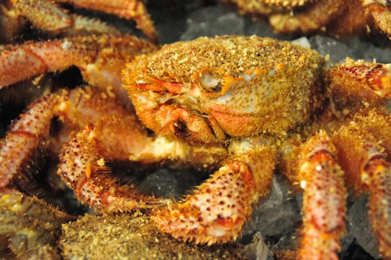 Fresh crab from the Tokyo Tsukiji Fish Market.