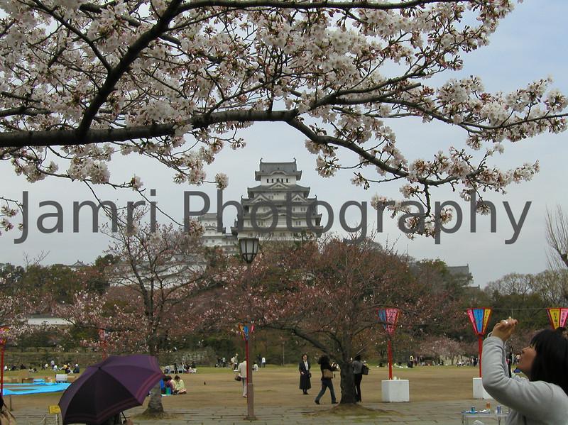 Photographing the Sakura at Himeji Castle, Himeji, Hyogo-ken, Japan