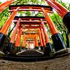 Fushimi Inari Taisha Shrine Torii Gates 4