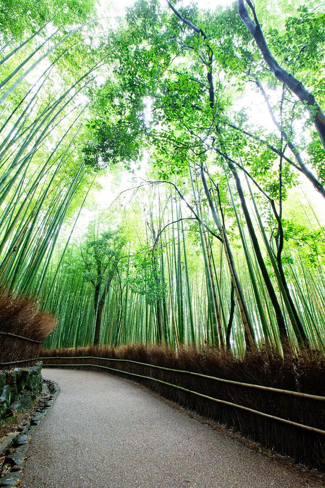 Arashiyama's bamboo grove (Kyoto, Japan)