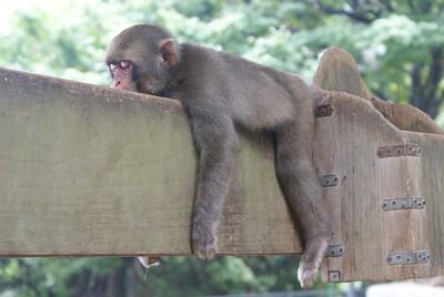 Resting in Beppu