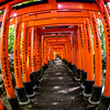 Fushimi Inari Taisha Shrine Torii Gates 15