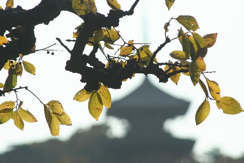 Fall colors at the Sankeien gardens in Yokohama.
