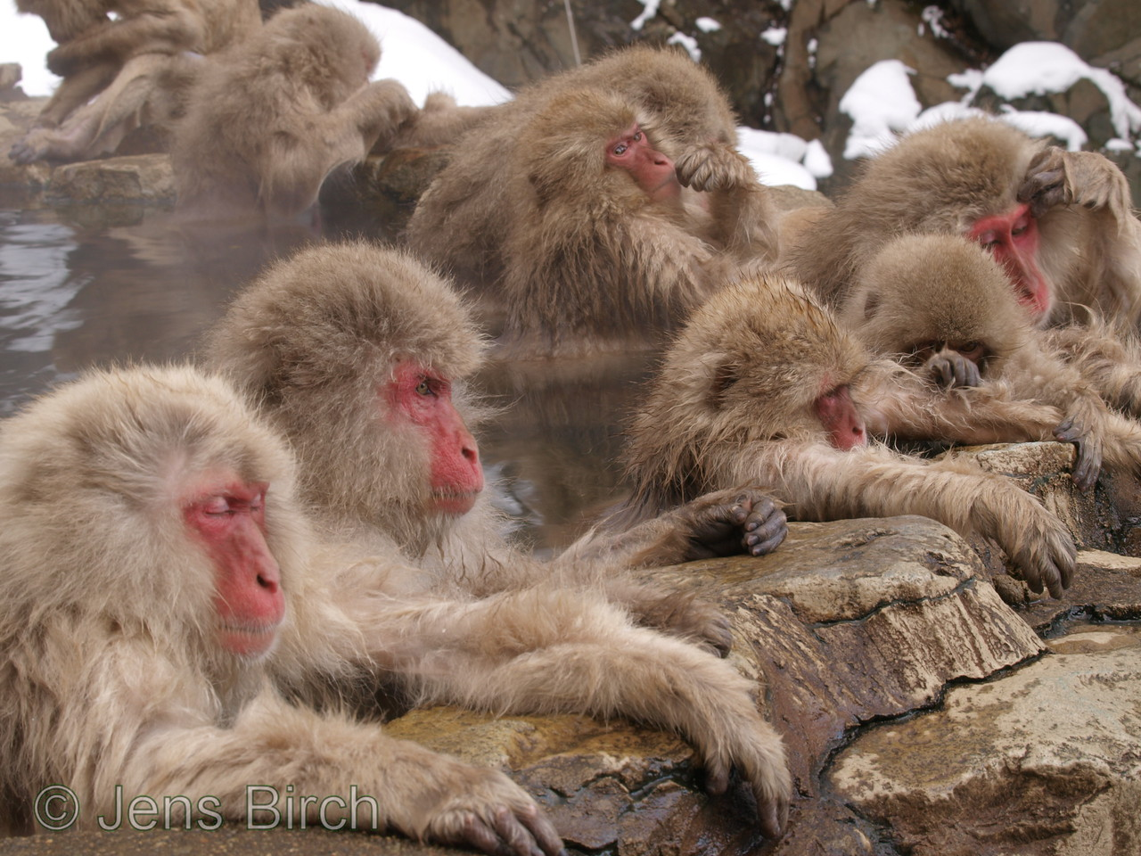 Just 20-30 of the macaques (out of about 200) are allowed in the pool.