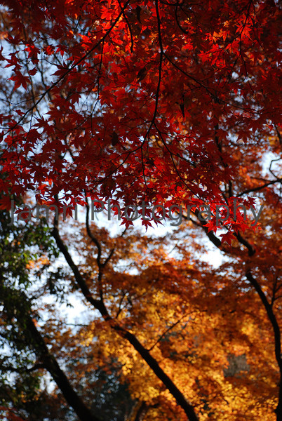 The Colours of Autumn, Arashiyama, Kyoto, Japan