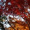 The Colours of Autumn, Arashiyama, Kyoto, Japan