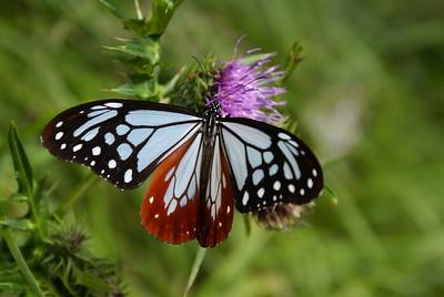 Butterfly in Beppu