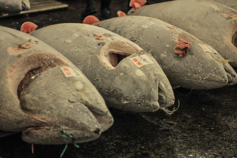 Fresh tuna from the Tokyo Tsukiji Fish Market.