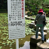 Please mind your step, Heian-jingu, Kyoto, Japan