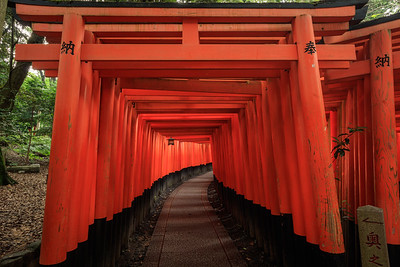 Some of the 10,000 orange torii gates at Fushimi-Inari shrine in Kyoto, Japan.