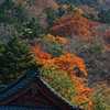 Fall colors in Nikko.