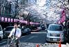 Cherry Blossoms in full bloom, Tokyo street<br /> Leica M7 28 mm summicron f2. Fuji Provia 400F