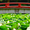 Lotus Bridge<br /> <br /> Kamakura, Japan.