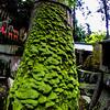Sub-shrine of Fushimi Inari Taisha Shrine Moss Tree