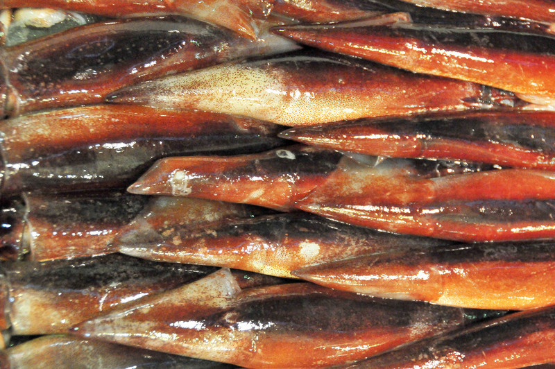 Fresh squid from the Tokyo Tsukiji Fish Market.