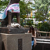 Hachiko with a cat