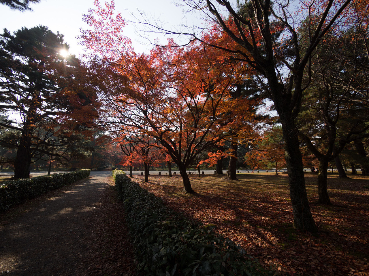 Imperial Palace Gardens again..