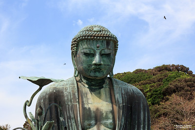 The Great Buddha, Kōtoku-in, Kamakura, Japan