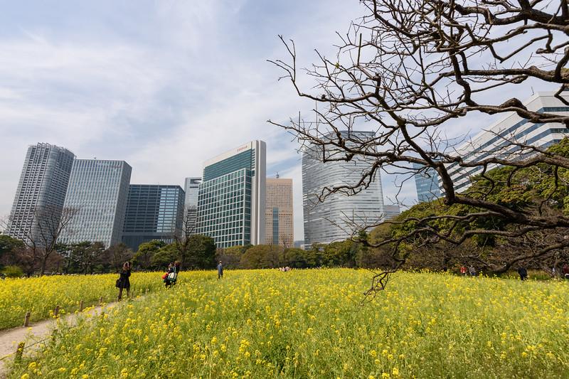 In Hamarikyu Gardens || Tokyo