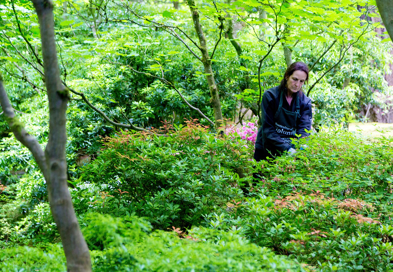 A volunteer painstakingly keeps the garden in trim