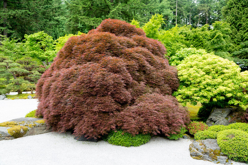 What is this huge rust-colored bush?