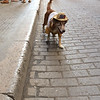Old Havana Dog
