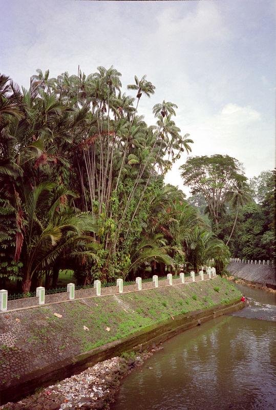 Botanische tuin Buitenzorg