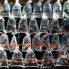 Aquarium Fish and Turtles For Sale, Bali