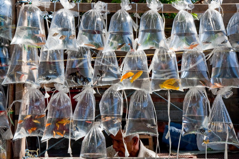 Aquarium Fish For Sale, Bali
