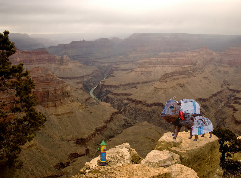 Mexican javalinas visit the Grand Canyon