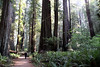 How insignificent we really are.<br />  Jedediah Smith Redwoods State Park, east of Crescent City, California