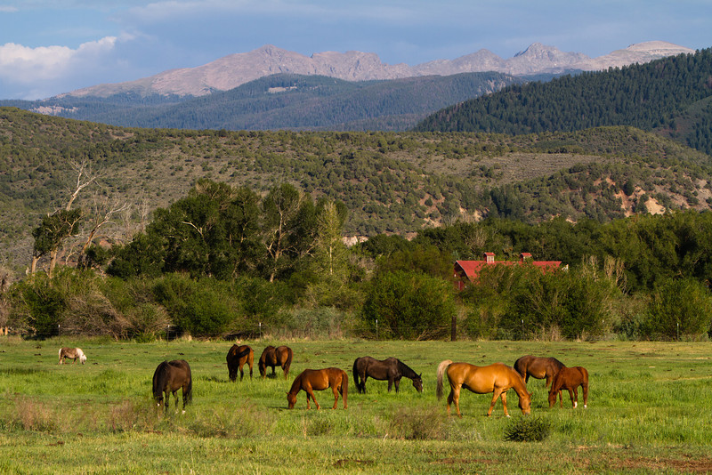 Horses grazing south of Eagle, Colorado.