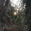 Jekyll Island Jungle Sunset