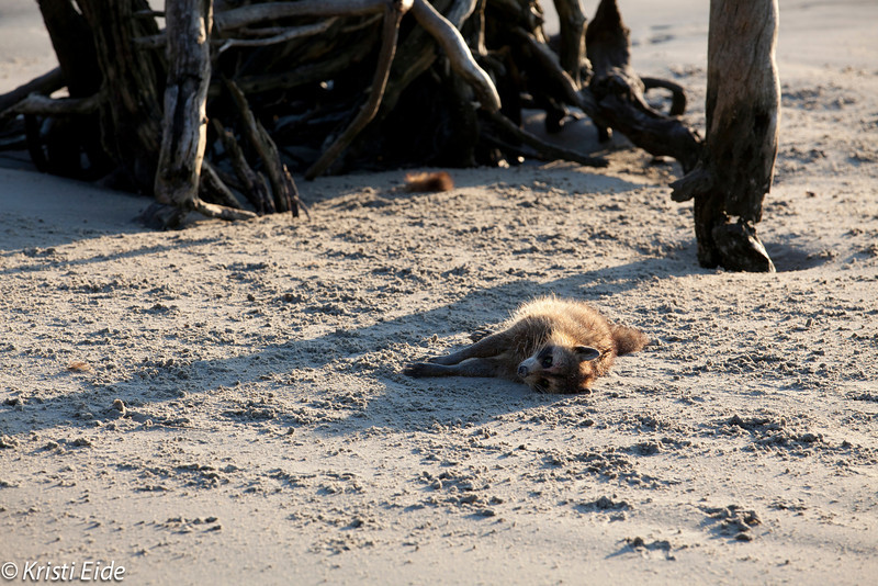 Life and death among the animals.  I couldn't bare to get nearer.
