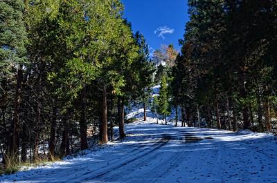 On way to Jenks Lake,Angelus Oaks, San Bernadino Mountains