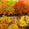 Autumnal Colors, Jeong-dong