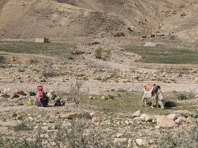 Bedouin with his flock.