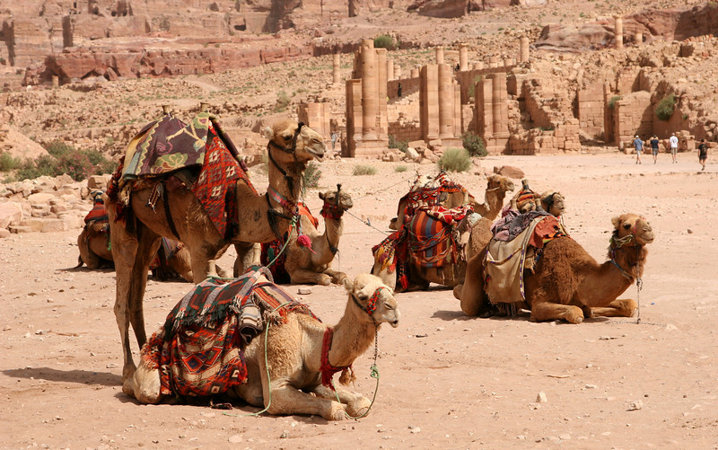 Petra - Camels in the temenos (sacred courtyard) of the Qasr al-Bint temple.  The Temenos Gateway and remains of the Great Temple can be seen in the background.