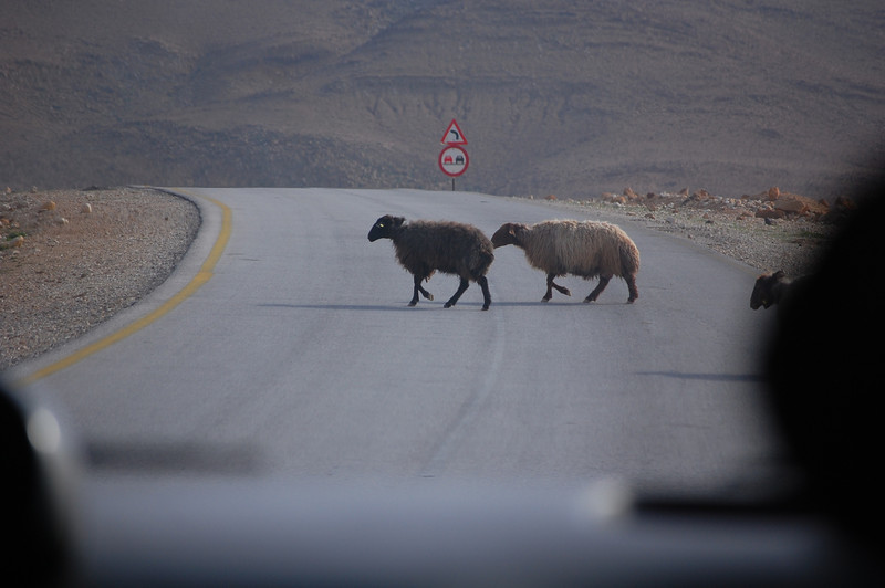 Jordan Sheep Crossing