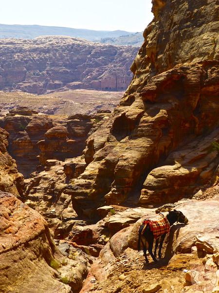 Climb to the Monastery, Petra photo 3