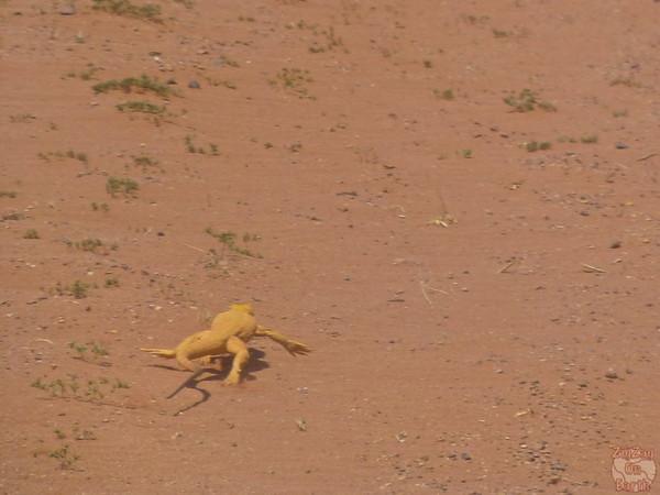 Wadi Rum, Jordan: animals 3