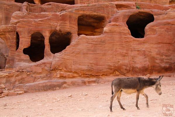 Street of facades Petra photo 5