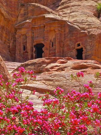 Blooming flowers, wadi al-Farasa, Petra