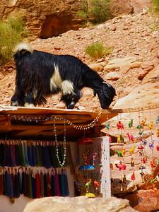 Goat on petra souvenir shop