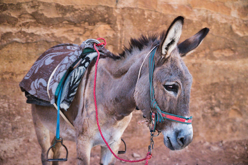 Tourist Transportation to Petra