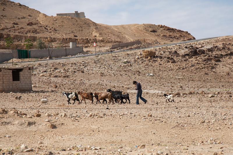 Herding, Jordan