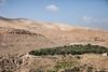 Olive grove, Jordan