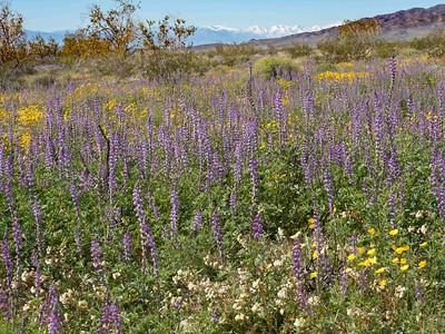 Wildflower bloom on Bodeja hiking trail